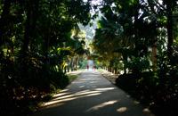 Botanical Garden - Tea factory